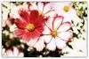Blumen aus eigener Zucht