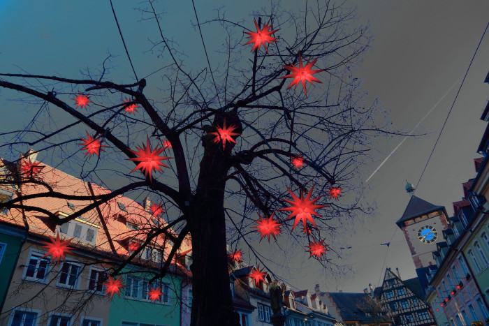 noch einmal verbreitet die sterbende Linde weihnachtlichen Glanz